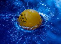 この画像は、サイトの記事「ラージボール卓球 大会 おすすめYouTube無料動画まとめ集!」のイメージ写真画像として利用しています。